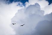 場所:ジュノー(英名:Juneau) 鳥名称:ハクトウワシ(英名:Bald eagle 学名:Haliaeetus leucocephalus)