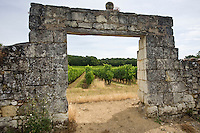 The vines of Saumur Champigny through an old stone archway, Loire Valley, France