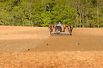Amishman cultivating with four horse team, Nippenose Valley, PA.