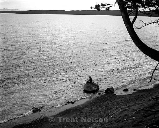 Woman reading on shore of Yellowstone Lake<br />