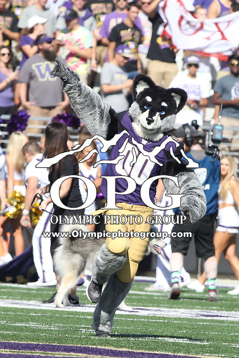 SEP 12, 2015:  University of Washington mascot Harry vs Sacramento State at Husky Stadium in Seattle, Washington. Washington won 49-0 over Sacramento State.