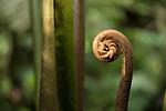New growth fern fiddle.