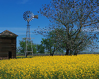 Scenic view of a windmill and pump house in a field of mustard flowers on a bright spring day. San Joaquin Valley, California.