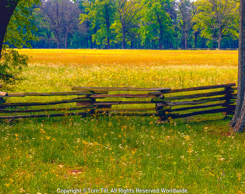 Wildflowers, Natchez Trace Parkway National Historic Park, MIssissippi