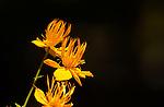 Jane and Bob Hendrix's garden at 10,000 feet in Breckenridge, Colo.