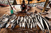 A diverse collection of fish fresh off the boats. (Photo by Matt Considine - Images of Asia Collection)