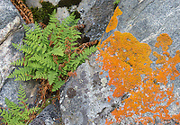 Rocks, lichen and ferns in Yellowstone.