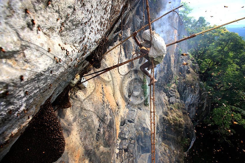 Then Mari hangs on to the ladder with only his feet and head, freeing his arms and body to work more efficiently. Millions of bees swarm around him with only the smoke to fend them off. He fills the tin container with honey at arms strength, using a second bamboo pole to cut the honeycomb off the cliff.