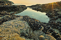 Rock pool at Perranporth, Cornwall.