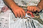 Skinning / Preparing Snake Skin