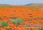 FB-S132, 4x6 postcard, Antelope Valley California Poppy Reserve