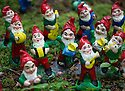 29/05/15<br /> <br /> Tuneful gnomes.<br /> <br /> For one group of hardy folk, today's rain only adds to the fun that can be had by the beach, fishing in the river, or playing in the woods.<br /> <br /> The gnomes, and a few pixies and fairies, make up a collection, now believed to be close to 2,000 individuals, that 'live' at the Gnome Reserve near Bideford, North Devon.<br /> <br /> Visitors are asked to wear gnome hats, so as not to scare the gnomes who feature as the largest collection in the Guinness Book of World Records. <br /> <br /> Ann Atkin's collection began in 1979 and features traditional gnomes on toad-stools to Olympian athletes, astronauts who work for 'GNASA', a beach scene complete with gnomes in bikinis, a queue for the ice-cream van, Punch and Judy gnomes and another floating on a lilo. Other gnomes can be scene kissing, and flashing their bottoms as the visit the Gents and Ladies toilets. <br /> <br /> <br /> All Rights Reserved - F Stop Press.  www.fstoppress.com. Tel: +44 (0)1335 418629 +44(0)7765 242650