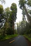 Redwoods, Redwood National Park