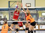 2016-01-09 / Volleybal / Seizoen 2015-2016 / Dames Geel &ndash; Herenthout / Willems (l.) en Van Noten (Geel) proberen de smash van Van den Bosch te onderscheppen<br /><br />Foto: Mpics.be