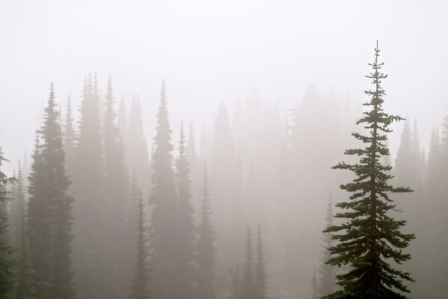 Trees silhouetted in fog, Paradise Meadows, Mount Rainier National Park, Pierce County, Washington, USA