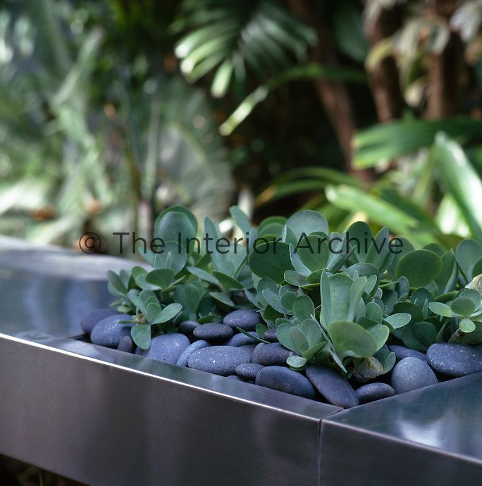 Detail of succulents set into a stainless steel table.