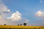 Europa, DEU, Deutschland, Baden Wuerttemberg, Odenwald, Neckar-Odenwald-Kreis, Mosbach-Reichenbuch, Agrarlandschaft, Rapsfeld, Bluehender Raps, Baeume, Himmel, Wolken, Gewitterzellen, Kategorien und Themen, Natur, Umwelt, Landschaft, Jahreszeiten, Stimmungen, Landschaftsfotografie, Landschaften, Landschaftsphoto, Landschaftsphotographie, Wetter, Himmel, Wolken, Wolkenkunde, Wetterbeobachtung, Wetterelemente, Wetterlage, Wetterkunde, Witterung, Witterungsbedingungen, Wettererscheinungen, Meteorologie, Bauernregeln, Wettervorhersage, Wolkenfotografie, Wetterphaenomene, Wolkenklassifikation, Wolkenbilder, Wolkenfoto....[Fuer die Nutzung gelten die jeweils gueltigen Allgemeinen Liefer-und Geschaeftsbedingungen. Nutzung nur gegen Verwendungsmeldung und Nachweis. Download der AGB unter http://www.image-box.com oder werden auf Anfrage zugesendet. Freigabe ist vorher erforderlich. Jede Nutzung des Fotos ist honorarpflichtig gemaess derzeit gueltiger MFM Liste - Kontakt, Uwe Schmid-Fotografie, Duisburg, Tel. (+49).2065.677997, ..archiv@image-box.com, www.image-box.com]