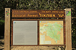 Israel, Jerusalem mountains, Eshtaol forest