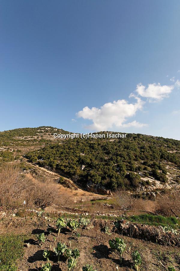 Israel, the Upper Galilee. Wadi Shfanim in Meron mountains