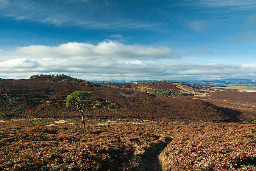 Auchterhouse Hill from Craigowl near Dundee, Tayside