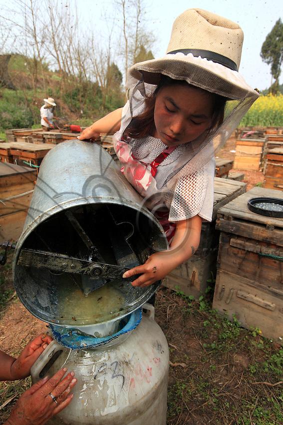Le miel est récolté au fur et à mesure, les cadres de rayons de miel vidé avec des centrifugeuses manuelles.///The honey is harvested as it is produced, the frames of honey combs being emptied by manual extractors.