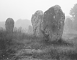 A cluster of megaliths in the Menec Alignment in the early morning mist.