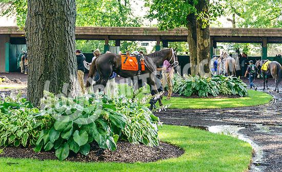 Kinsley Kisses before The Delaware Oaks (gr 3) at Delaware Park on 7/9/16