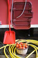 Europe/France/Rhône-Alpes/69/Rhône/Bagnols: Chez Daniel Carron Viticulteur AOC Beaujolais- panier de tomates dans le Cuvier lors des vendanges
