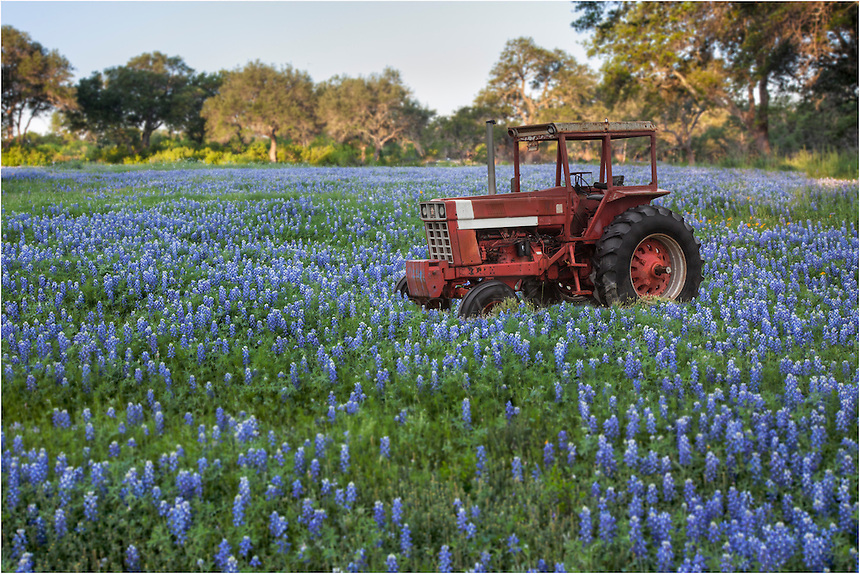 While driving around looking for Texas wildflowers I found this old tractor sitting in a field of bluebonnets. It looked like it hadn't moved in many years.