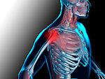 Medical Illustration, shoulder