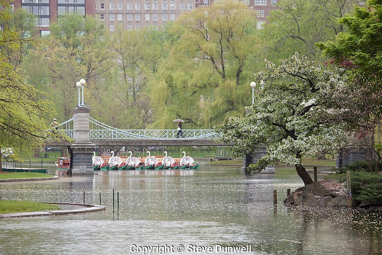 Public Garden spring, flowers misty rain, Boston, MA