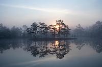 Dawn over mist-laden lake, Bergslagen, Sweden.