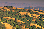 Oak trees and grass hills along Palassou Ridge, Santa Clara County, California