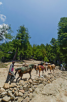 Pack train of horses and porters climbing rocky trail in the stunning alpine wonderland above Naranag, Kashmir, India.
