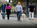 Graduating more than ten thousand teams since its founding in 1942, Guide Dogs for the Blind has provided at no cost a means for enhanced mobility and companionship for legally blind people. Seattle, Washington, USA