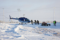 01874-11719 Polar Bear (Ursus maritimus) biologists preparing to airlift bear from Polar Bear Compound, Churchill MB