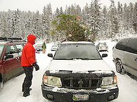 A man fixes a Christmas tree on top of a car in Hyalite Canyon near Bozeman, Montana.
