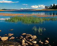Crescent Lake in the White Mountains; Apache-Sitgreaves National Forest, AZ