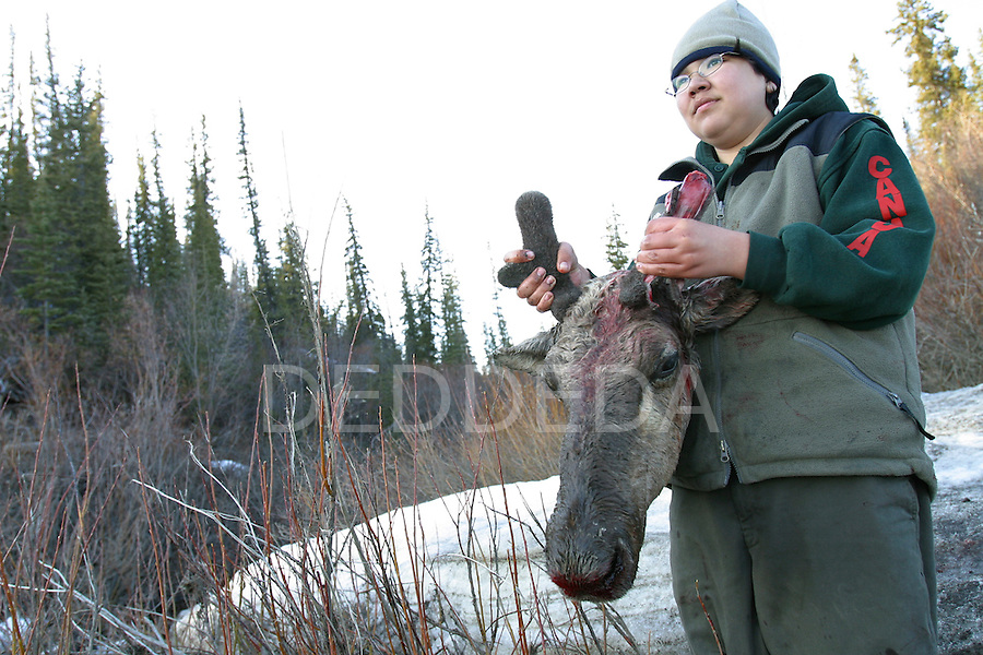 Vuntut Gwitchin First Nation member, Kenneth Tetlichi, 13, holds the head of his first hunted caribou along the banks of the Porcupine River near Old Crow, Yukon Territory, Canada.