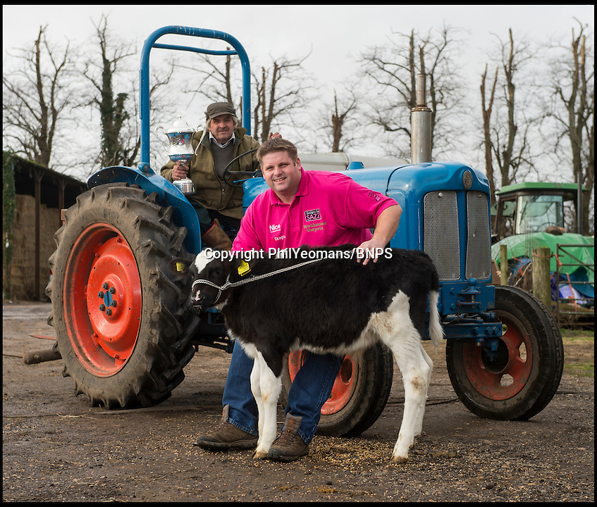 BNPS.co.uk (01202 558833)<br /> Pic: PhilYeomans/BNPS<br /> <br /> Scott with dad Jeff(67) and a calf.<br /> <br /> New BDO Darts world champion Scott Mitchell(44) is back on the family farm in Bransgore, Hampshire, today - after promising to buy his father Jeff a new tractor with his winnings.