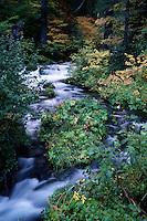 Scenic landscape of the Roaring River in autumn. Oregon.