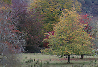 General view of trees in Autumn in the Trossachs.