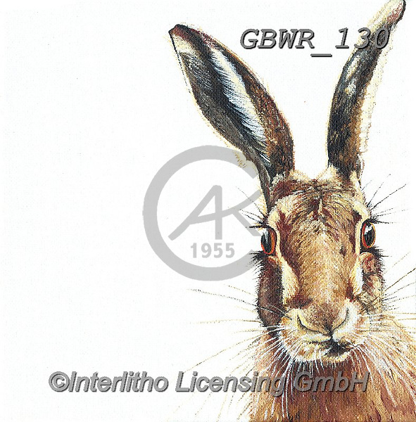 Simon, REALISTIC ANIMALS, REALISTISCHE TIERE, ANIMALES REALISTICOS, paintings+++++Card_OliviaH_Hare,GBWR130,#a#, EVERYDAY