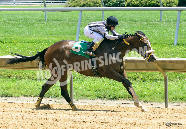 Optimistic Outcome winning at Delaware Park on 6/2417