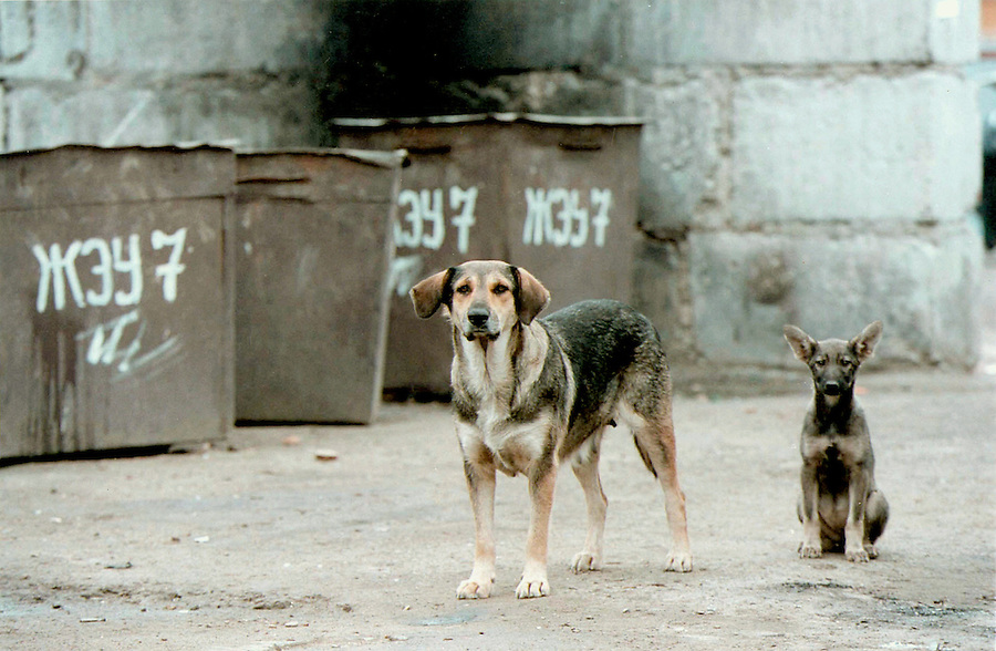Reutov, Russia, 17/07/1998..Stray dogs and apartment rubbish bins on Prospect Mira, the street where Ivan Mishukov lived before running away from home to live with a pack of wild dogs.