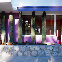 A row of tall cacti stand sentinel at the entrance to the property
