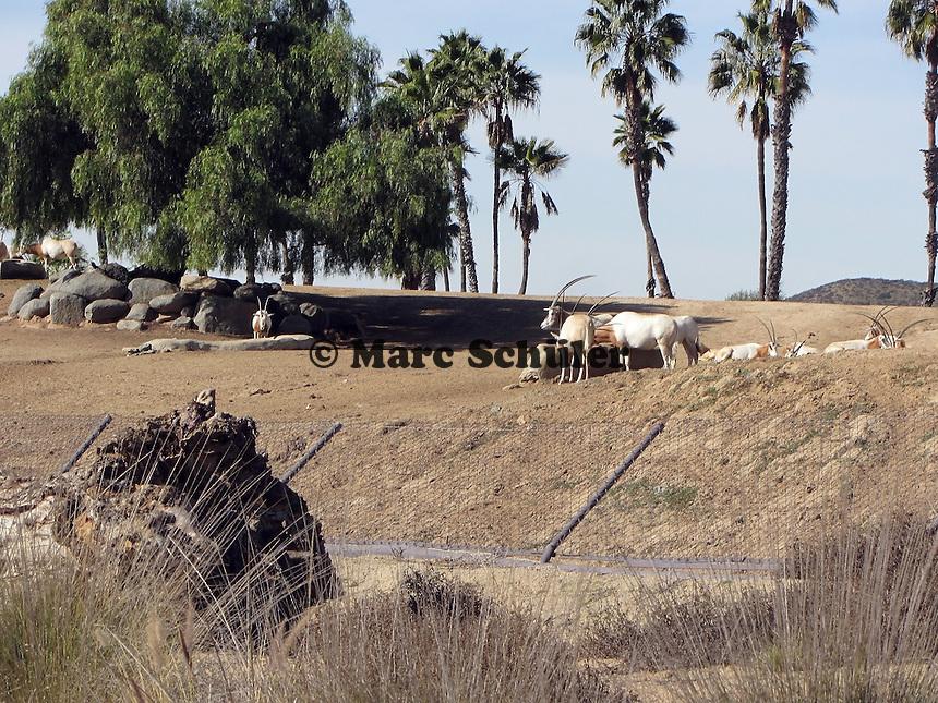 Afrikanische Savanne im San Diego Safari Park