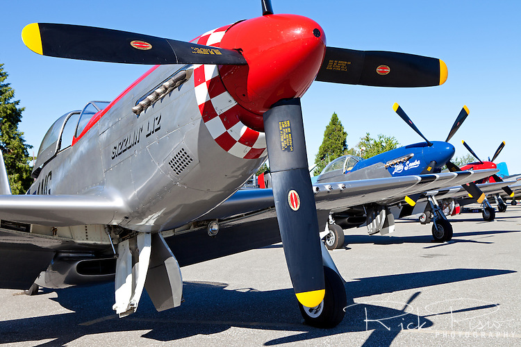 P-51 Mustangs, fronted by Sizzlin Liz, lined up at the Nevada County Airport in July, 2013