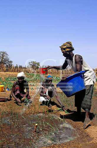 Tankular, Gambia. Women working on a co-operative market garden, one using an old tin and a plastic bin to water crops.