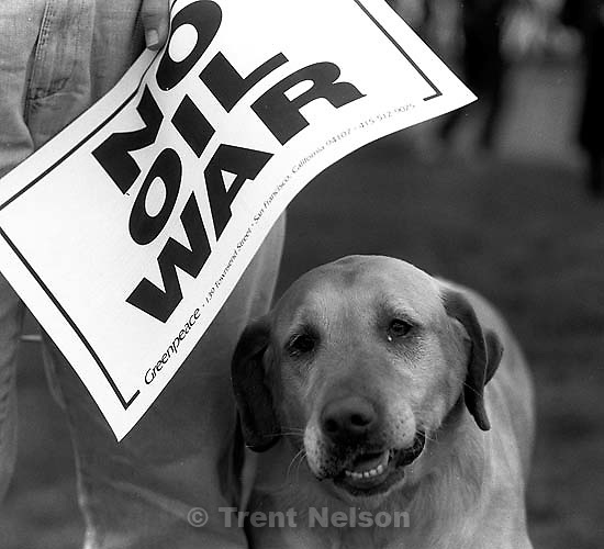 &quot;No Oil War&quot; sign and dog at Gulf War protest at Naval Weapons Station<br />